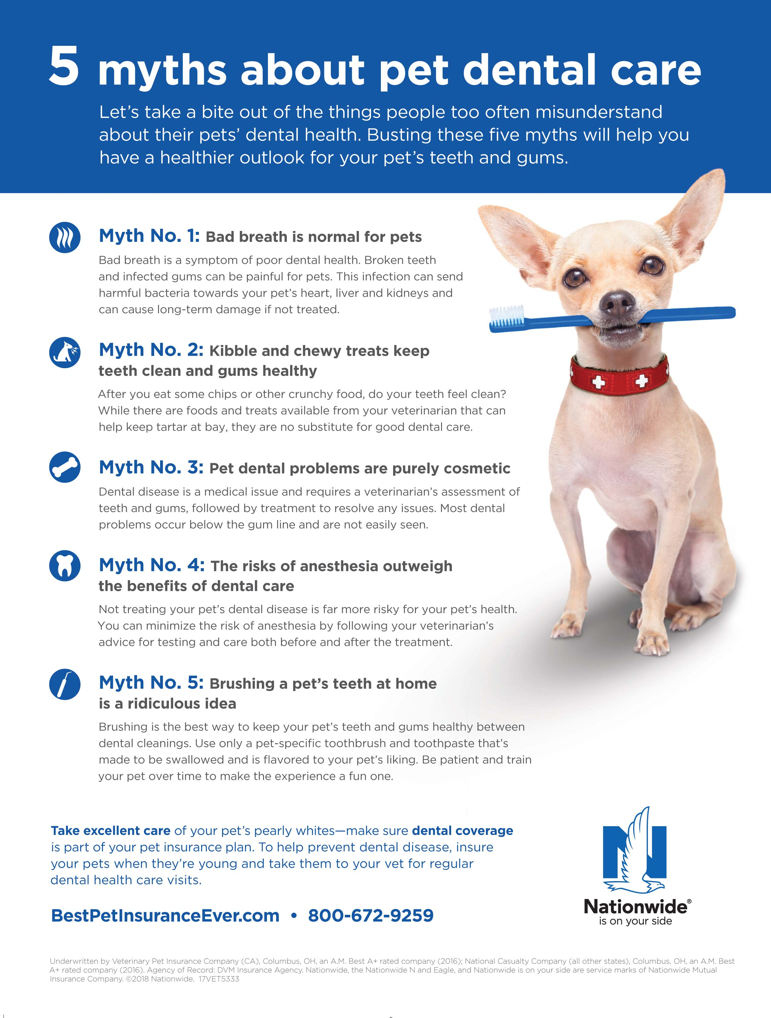 5 myths about pet dental care
